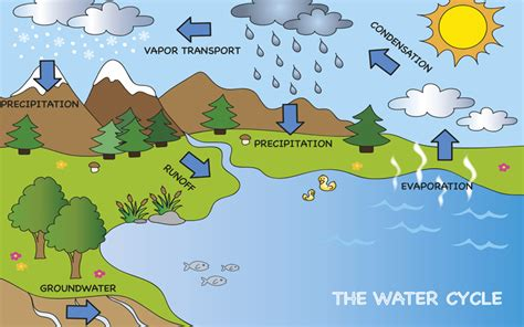 Water Cycle  Earth Facts And Information