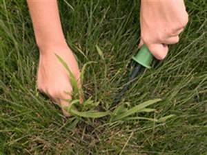 Comment Enlever Les Mauvaises Herbes : mauvaises herbes gazon quand et comment les enlever ~ Melissatoandfro.com Idées de Décoration