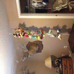 Dreambaby Hammock And Chain by Baby Hammock And Chain Walmart