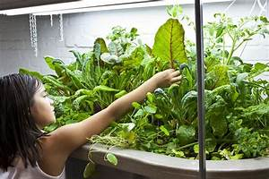 Basement Aquaponics  Growing Vegetables And Tilapia In