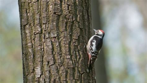 how to stop woodpeckers pecking away at log home the