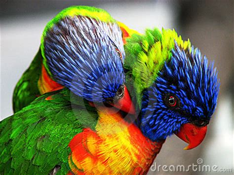 bright colored birds royalty  stock image image
