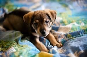 Cute Mutt Puppies