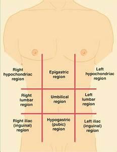 Regions Of Abdomen