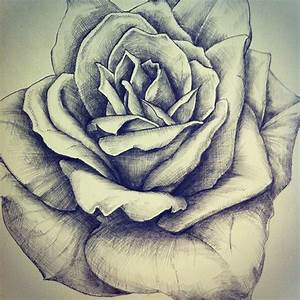 Process #rose #flower #drawing #paint #art #pencil #sketch ...