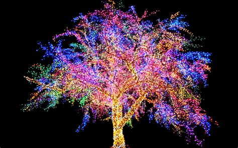 the magic tree paulomi mukherjee s blog