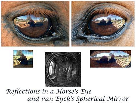eye horse reflection tricks plays uh engines edu