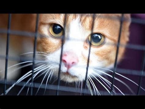 Live Intake With Feral Cat Chloe, Just Trapped And