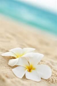 Das hawaiianische Vergebungsritual Ho'oponopono – Schirner ...