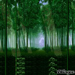forest background Picture #86489095 | Blingee.com