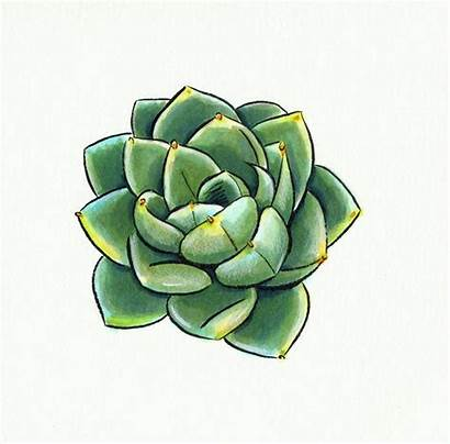 Succulent Drawing Sketch Drawings Cactus Succulents Tattoo