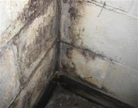 About Mold & Mildew. Standard Kitchen Sink Base Cabinet Size. Everything But The Kitchen Sink Meaning. Clearance Kitchen Sinks. Kitchen Sink Repair. Solid Surface Kitchen Sink. How To Clean Silgranit Kitchen Sinks. What Is The Best Undermount Kitchen Sink. Clogged Kitchen Sink With Garbage Disposal And Dishwasher