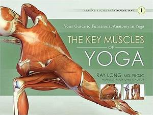 The Key Muscles Of Yoga  Your Guide To Functional Anatomy