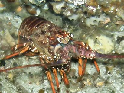 Shrimp Crustacea Crabs Lobsters Mouthparts Marine Isopods