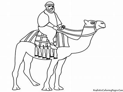 Camel Coloring Unta Colorare Disegno Gambar Desert
