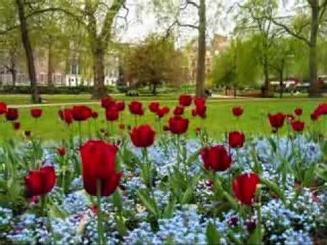 Jardin De Rosas  Annette Moreno  Mis Flores Pinterest