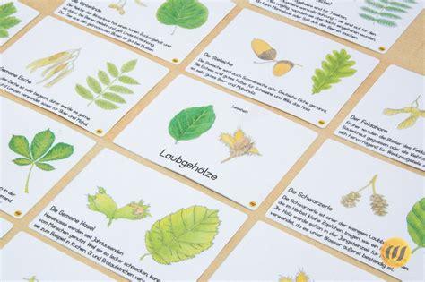 In dieser anleitung zeigen wir kostenlose übungen und vorlagen für ein herbarium für biologie in der 5. Herbarium Deckblatt Zum Ausdrucken