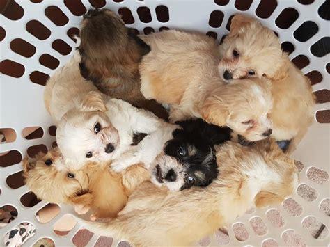 south australias   surprising animal rescues
