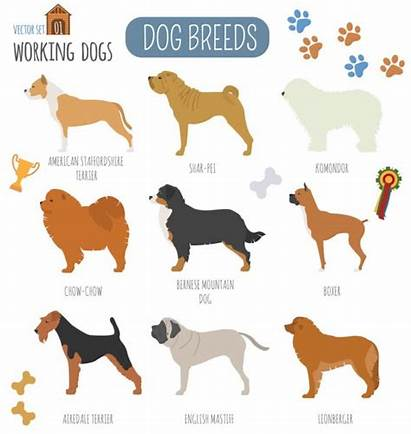Dog Working Breeds Icon Watching Flat Vector