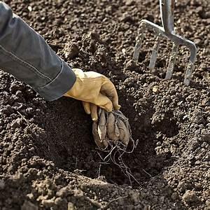 Dahlien Wann Pflanzen : dahlien pflanzen das manufactum gartenjahr ~ Frokenaadalensverden.com Haus und Dekorationen