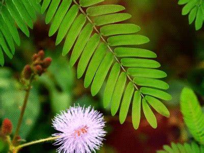 mimosa  fabien gouby  dribbble