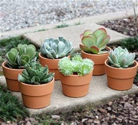 vasi in coccio vasi piante grasse piante grasse