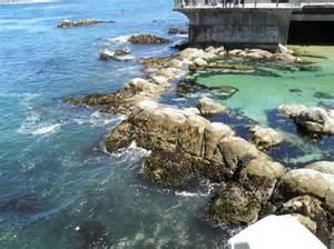 Great Tide Pool Monterey Bay Aquarium