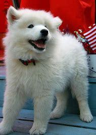 Cute White Dog Names