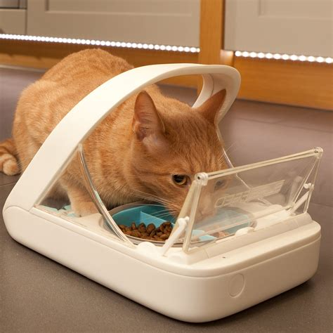 proof cat feeder surefeed microchip pet feeder my review