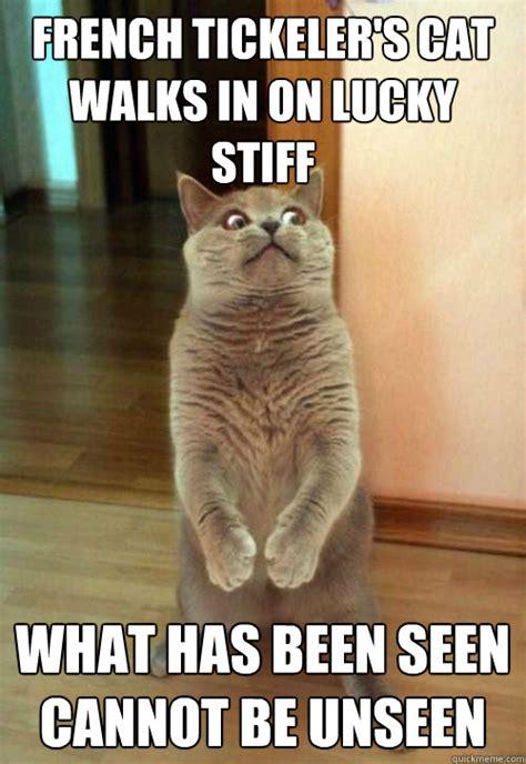 Meme In French - french tickeler s cat walks cat meme cat planet cat planet