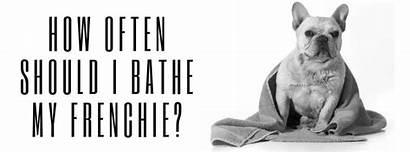 Should Bathe Often Frenchie French Making Bathtime