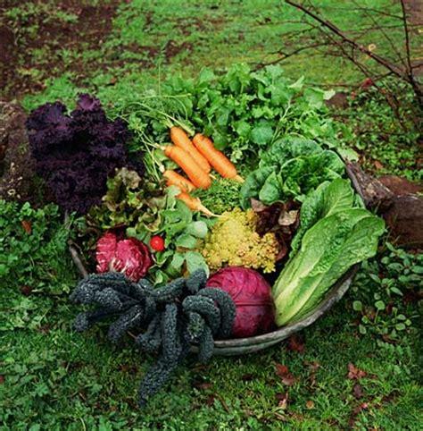Fall Vegetable Gardens For Santa Fe « Giantveggiegardener