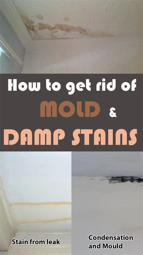 rid  mold  damp stains cleaningtipsnet