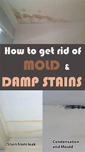 How to get rid of mold on the bathroom ceiling 28 images for How to get rid of mold in the bathroom walls
