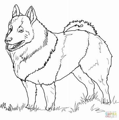 Coloring Pages Poodle Schipperke Husky Dane Bernard