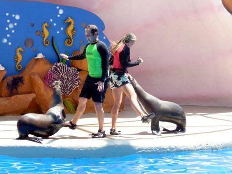 12 Zoo & Aquarium Military Discounts ideas   military ...