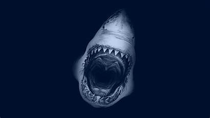 Shark Screensaver Desktop 4k Wallpapers