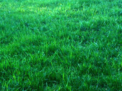 green grass background  stock photo public domain