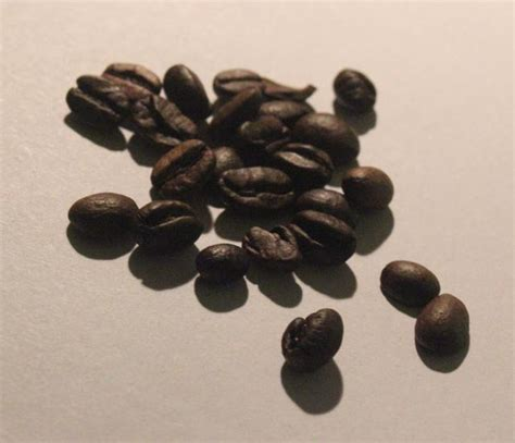 Check out our homewood shop or buy coffee online via our website. Coffee seeds - open fotos   free open source photos, public domain photos and pictures