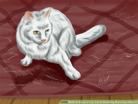 Cat Excessive Shedding by 3 Ways To If Your Cat Is Shedding More Than Normal