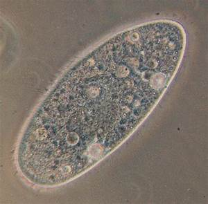 Ch. 20 Diversity of protists - Biology 204 with Rinchard ...