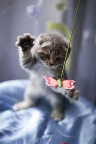 Kittens Playing with Toy Cat