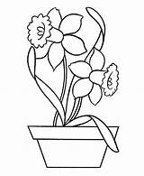 Daffodil Coloring Daffodils Template Sketch Outline Drawing Flower Templates Field Pottery Popular sketch template