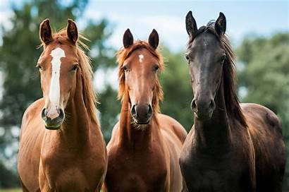 Horse Bestiality Zoophile Virginity Perversion Losing Horses