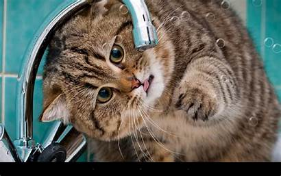 Funny Cat Cats Android Google Wallpapers Apps