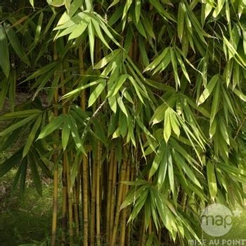 prix bambou en pot bambou d int 233 rieur h 60cm pot autres marques jardinerie truffaut
