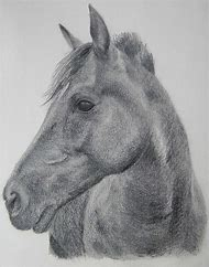 Drawing Horse Head Sketch