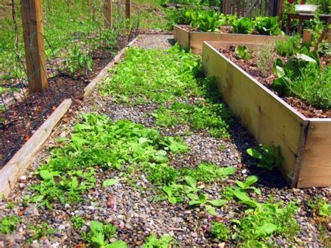 weeds in paths use vinegar not roundup