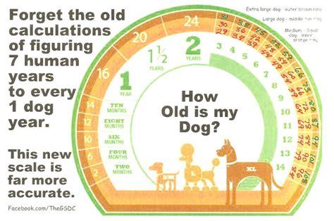 senior pet health    pet considered  senior