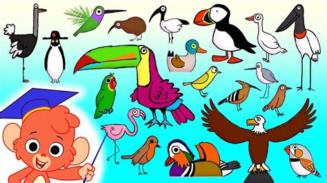animal abc learn alphabet      cartoon birds